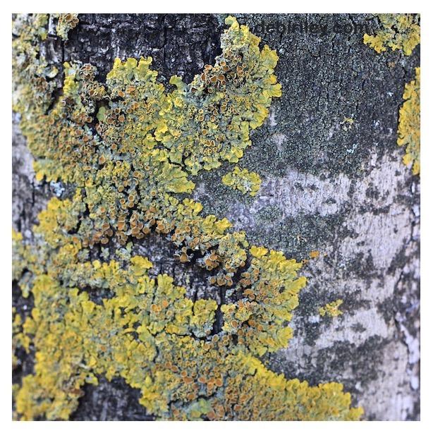 lichen tree photograph, nature walks, creative art journal, debiriley.com