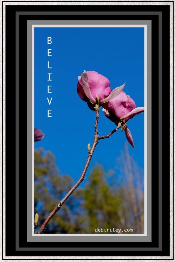 Spring arrives, pink magnolia in spring photograph, debiriley.com