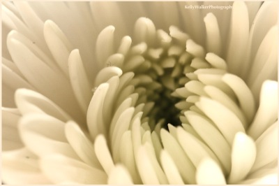 flower macro photography, life unfolds poem, Kahlil Gibran, debiriley.com