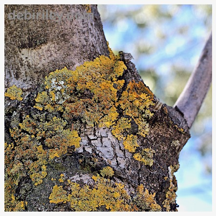 zen stroll, nature walk, tree and lichen, photography, debiriley.com