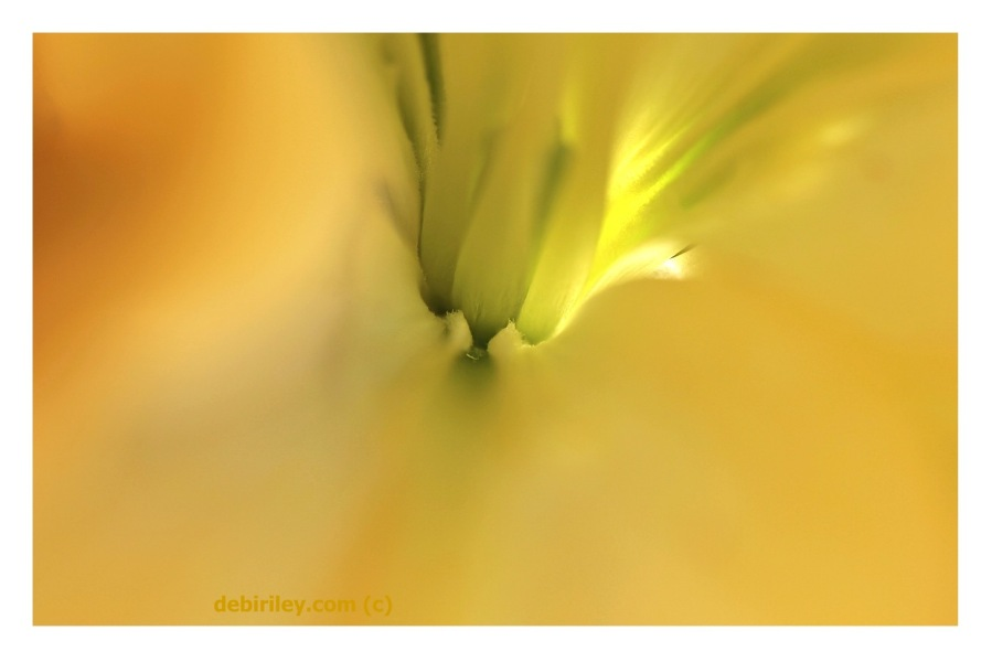 soft focus floral, macro abstract flower, debiriley.com