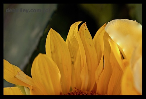 contrasts of light, texture, warm and cool, macro flower photography, creative and original art, being yourself, canon 600d, debiriley.com