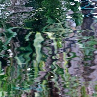 canon 600d photographs, canon 100mm nature photos, water reflections in macro, debiriley.com
