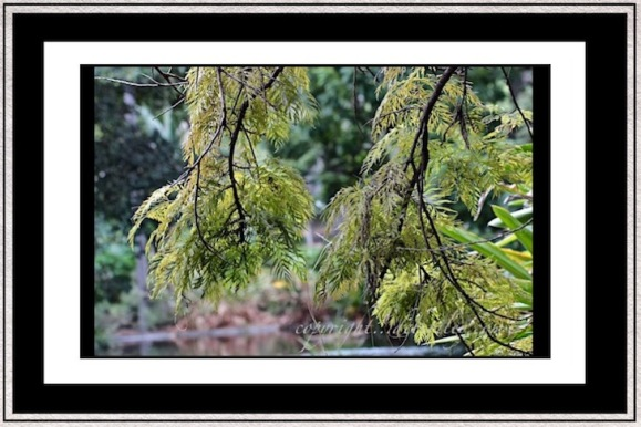 nature photography, trees and foliage in greens, zen moments, debiriley.com