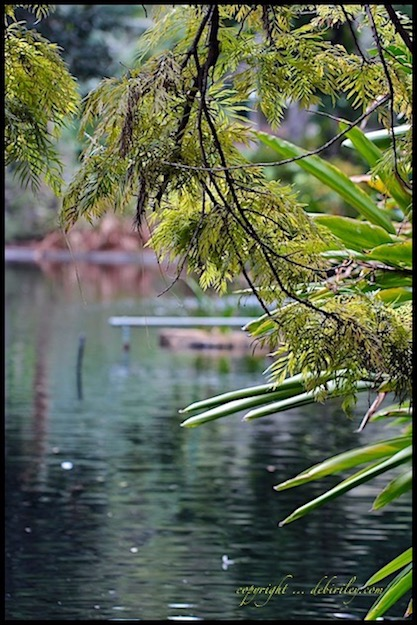 calm in the midst of chaos, nature photography, finding serenity, Perth zoo, debiriley.com