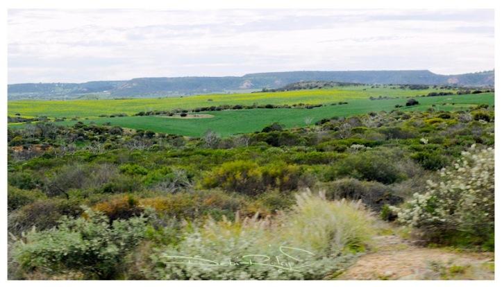landscape fields photograph, foregrounds, debiriley.com