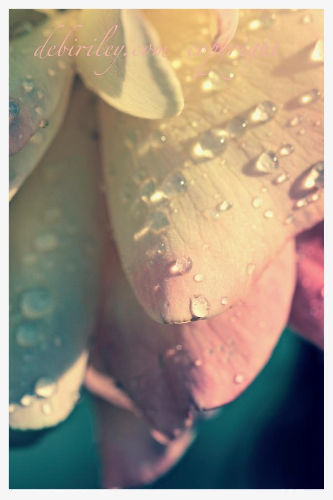 Peaceful: in my RoseGarden