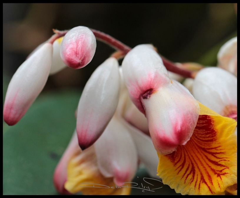 bright ginger blossom photo, debiriley.com