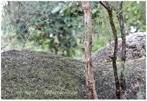 zen of nature, contentment found in peace, debiriley.com
