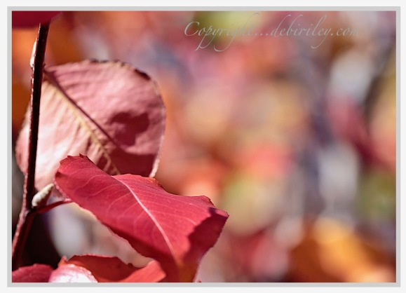 fall foliage in rust and reds, photography of autumn, debiriley.com