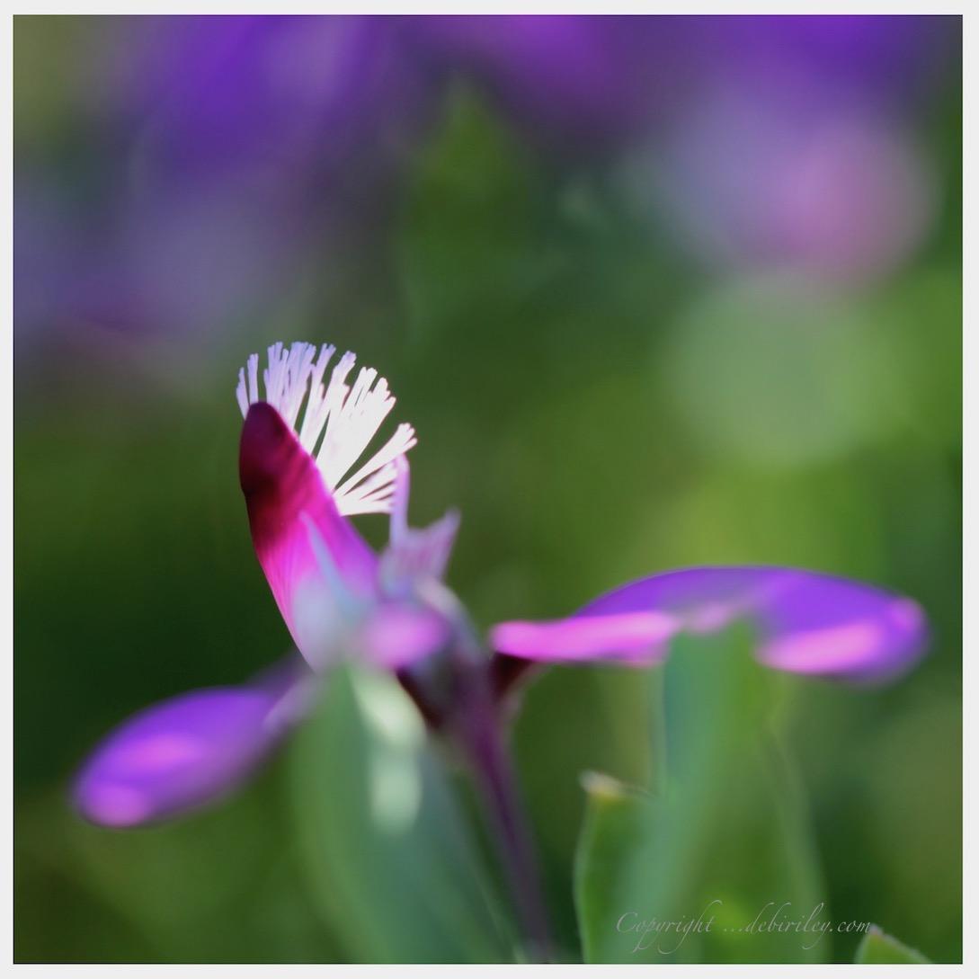 zen strolls and nature walks, flower photography,