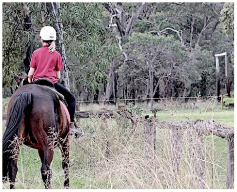 horse riding, learning to ride, building confidence, debiriley.com