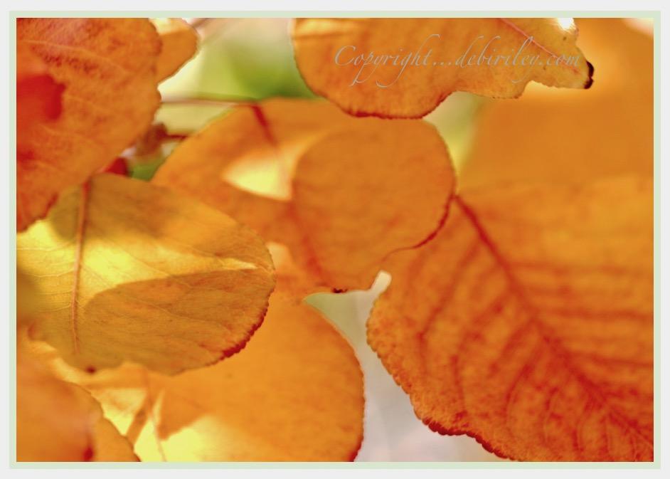 In Golden Ambers andTopaz