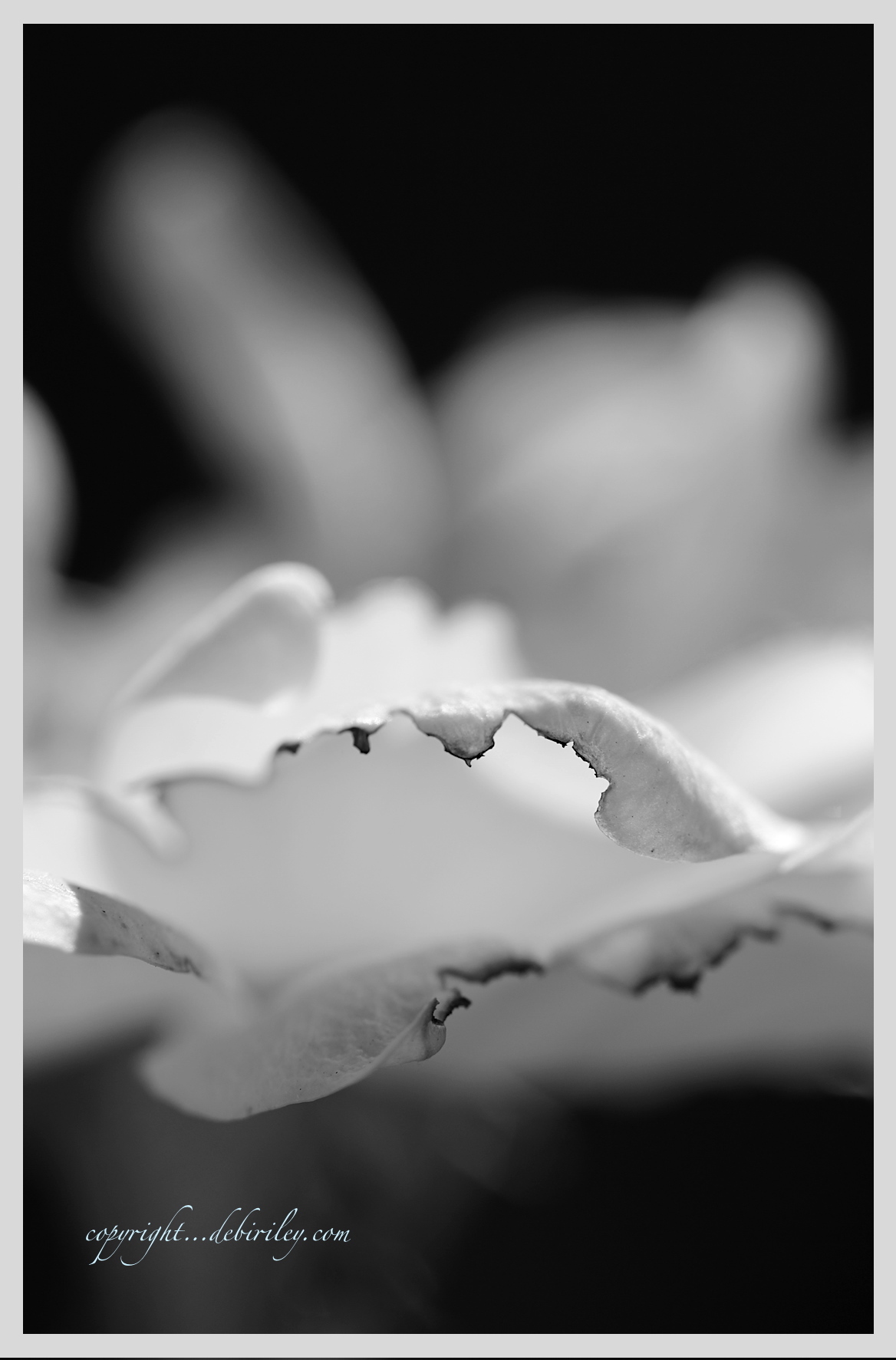 black and white flower photograph, changing the message in photography, debiriley.com