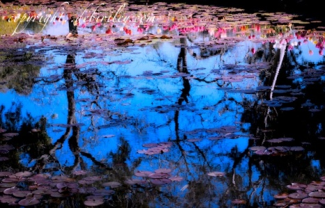 nature photography, pond reflections in deep blue, debi riley artist, creative photography, debiriley.com