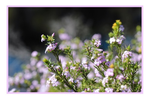 nature meditation, relax in the forest, landscapes to calm and soothe, debiriley.com