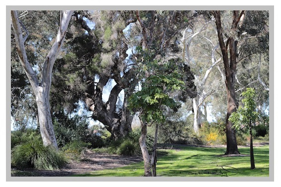 walking in the forest, zen strolls, nature photography, meditation in the forest, colors of the bush, debiriley.com