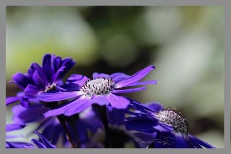 macro purple flowers, canon rebel camera, being positive, debiriley.com