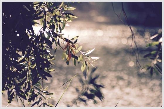 zen strolls, nature walks, zen photography, debiriley.com