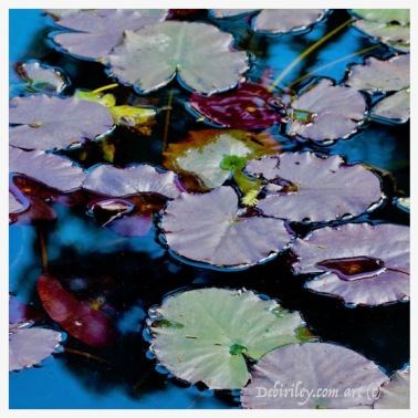lily pond in deep purple, nature photography, cool palette blue green and lavender, debiriley.com