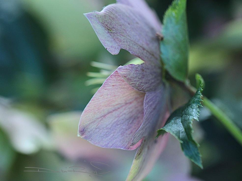 Forest floral meditations