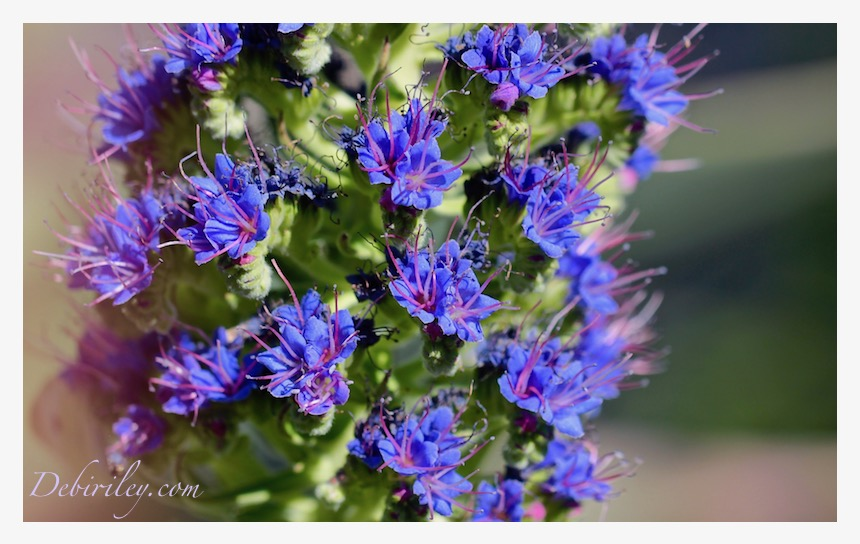 blue flower photograph, zen stroll, relaxing nature walks, debiriley.com