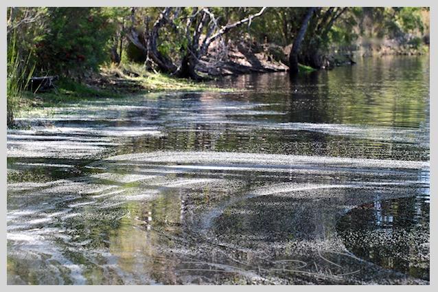 nature photography, water and shoreline, zen strolls in nature, debiriley.com
