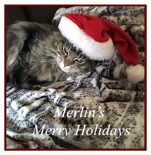 holiday cat card, cat in a hat, long haired cat with santa hat photography, debiriley.com
