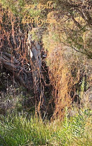 zen strolls in nature, foliage green to paint watercolors, debiriley.com