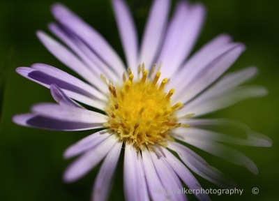 purple flower macro, floral photography, May day blooms, debiriley.com