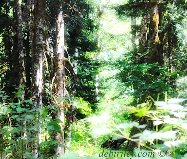 summer, pacific northwest, forest, sunlight