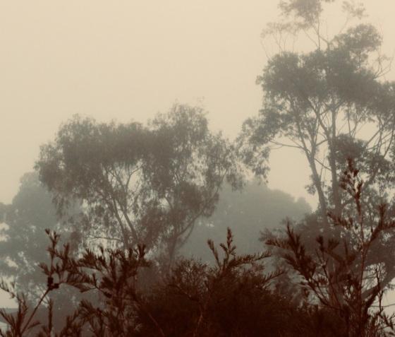 local park scene fog